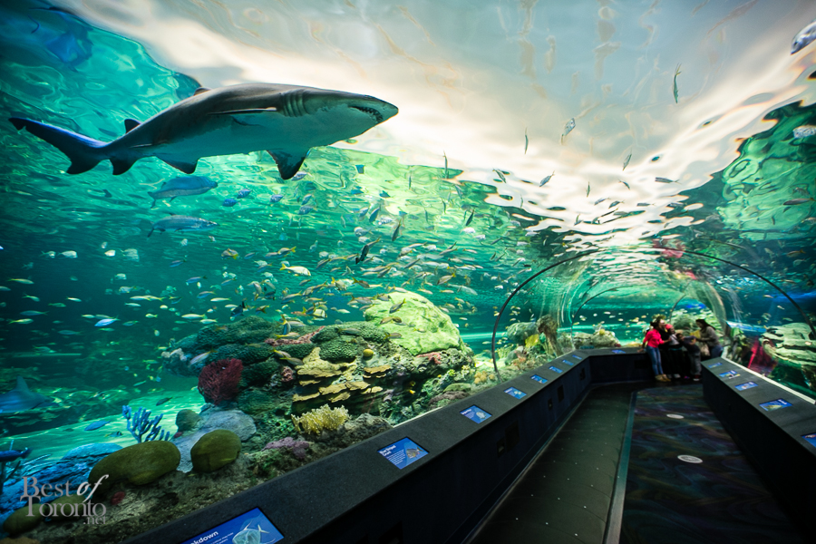 Skip the Line: Ripley's Aquarium of Canada in Toronto. DEAL FEATURED AND CHARGED IN US CURRENCY. Ripley's Aquarium is Canada's largest indoor aquarium - Immerse yourself in a world of 20, aquatic animals and discover your own underwater adventure in the heart of downtown breakagem.gq: $