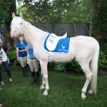 El Dorado, a thoroughbred horse